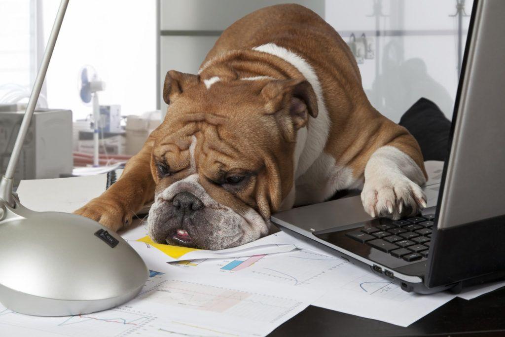 dog resting head on messy desk